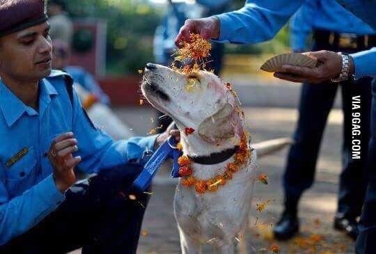 In Nepal, they're having a festival that honours dogs.