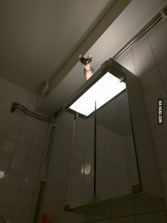 Going to the bathroom at a friend's house when I heard a sound.