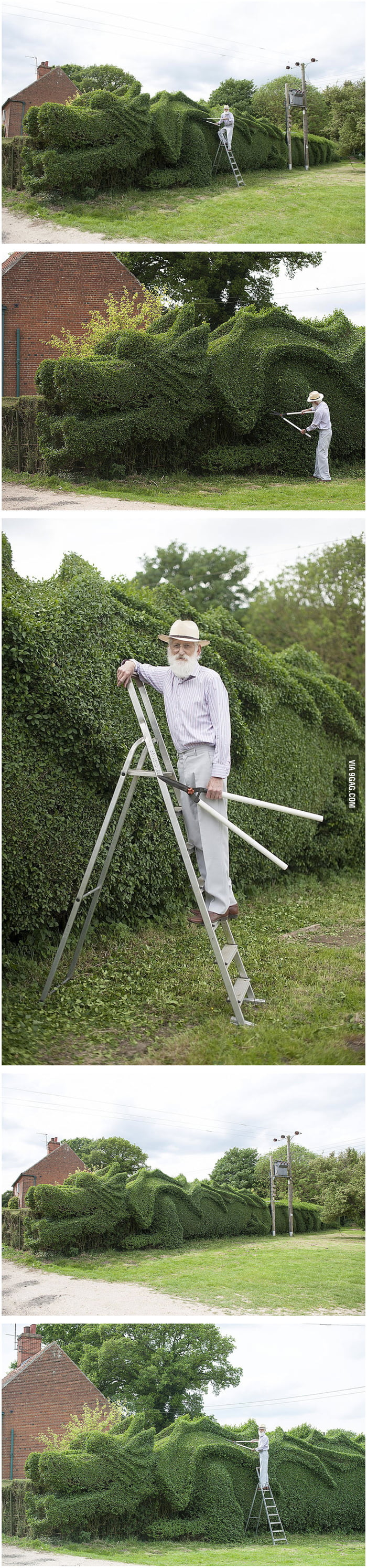 Elderly Gardener Spent The Last 13 Years Turning His 150-Ft-Long Hedge Into A Fantastic Dragon