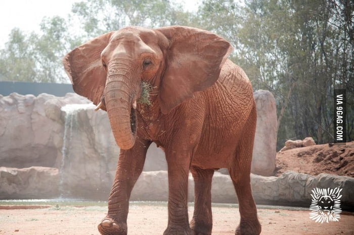 Zoo elephant throws rock at visitors, kills a 7 yrs old girl..... 2016 everyone