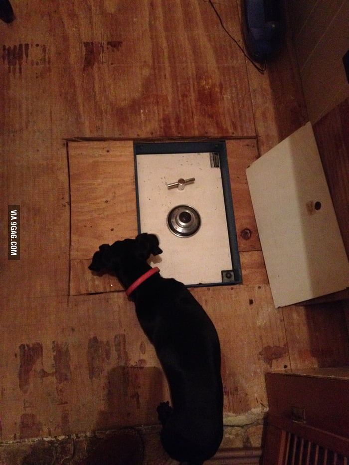 What my girlfriend's mum found under the pantry floor...