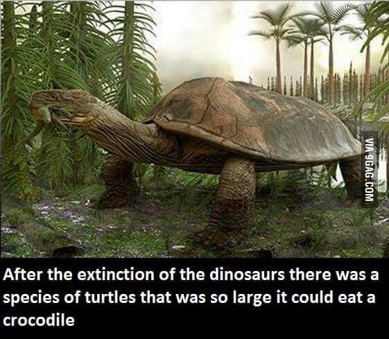 Correct me if I'm wrong but that's a tortoise