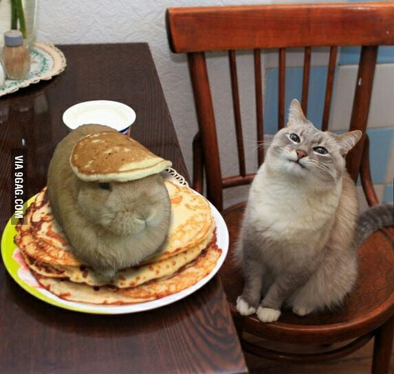 Waiter! There is a HARE in my pancakes!