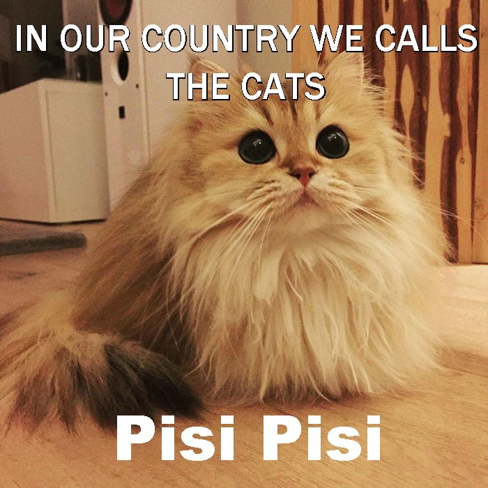 How do you guys calling kitties?