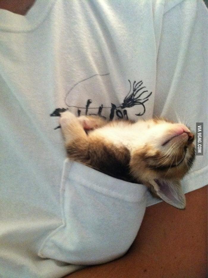 Pocket Pussy