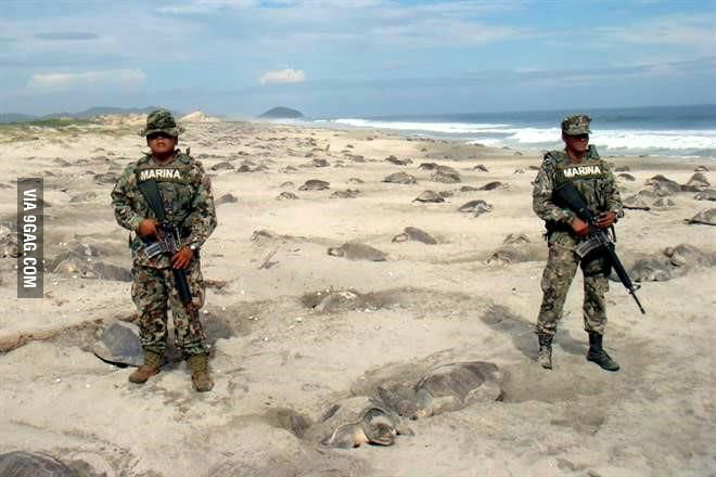 Mexican soldiers protecting turtle's eggs from being stolen