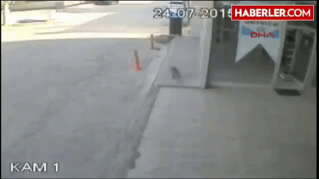 A monkey attacking a woman in an office in Turkey