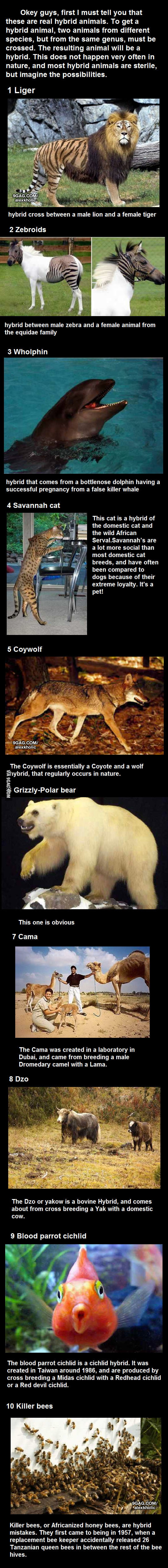 Top 10 Hybrid Animals