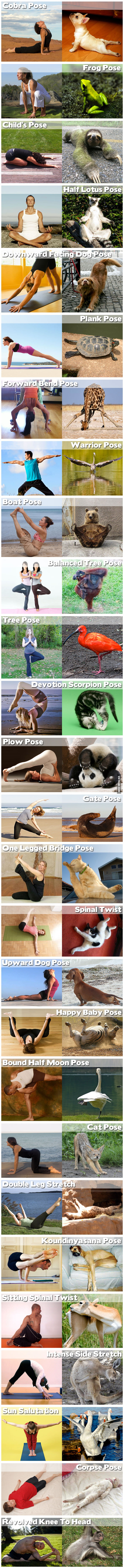 Yoga Positions Demon