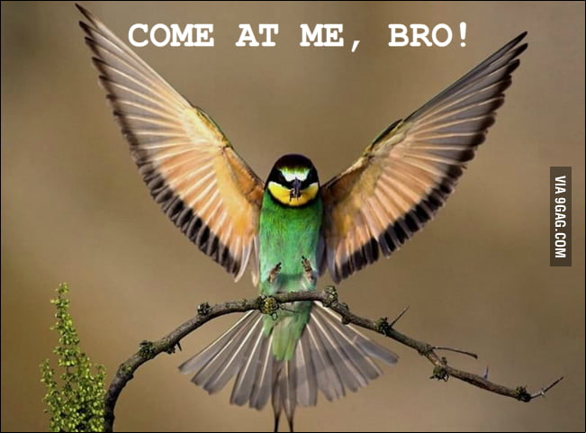 Come at me, bro