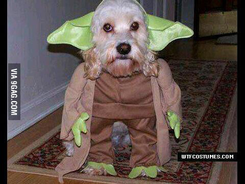 The Woof is strong w