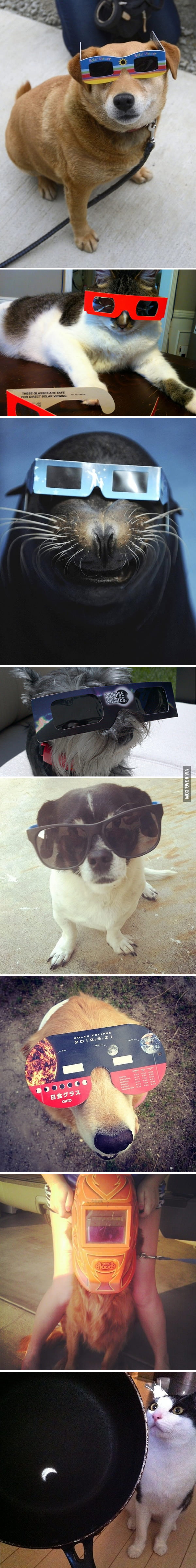 Animals Watching The Solar Eclipse