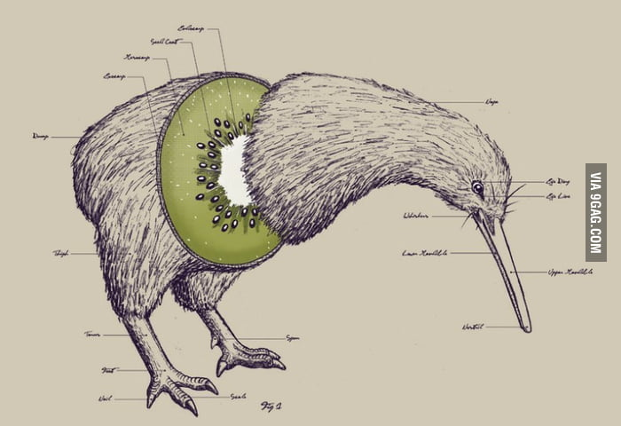 Anatomy of a Kiwi Bird