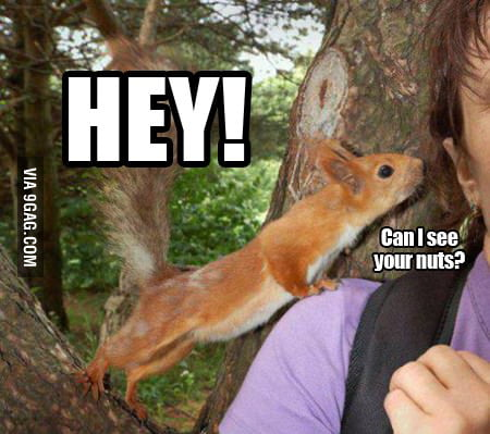 Can I see your nuts?