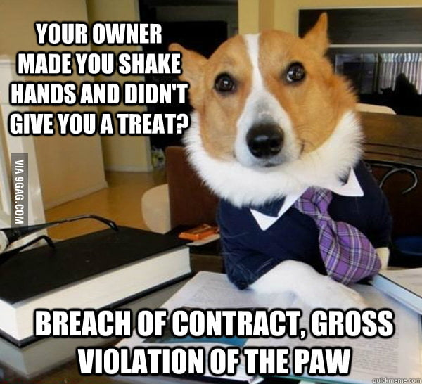 Contract Lawyer Dog