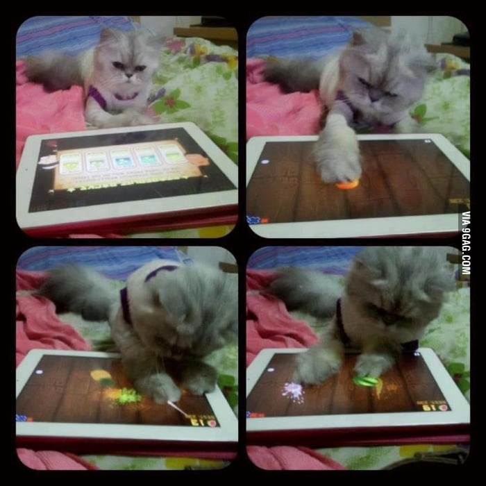 My puss in Fruit Ninja