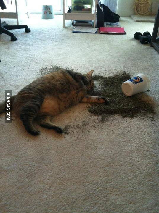Catnip party