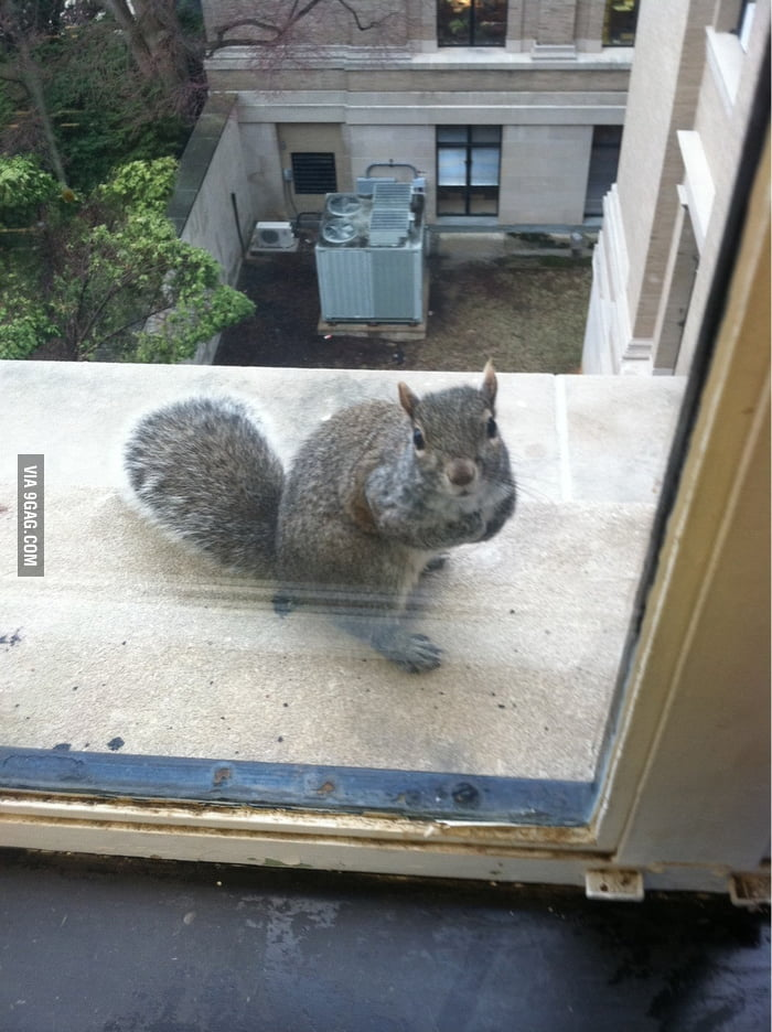 Saw a squirrel outside