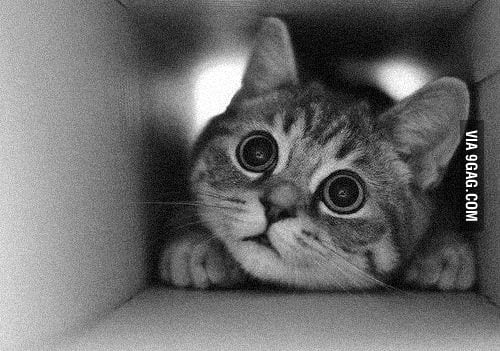 Can I come out meow?