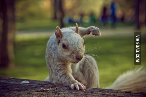 I'm Ninja Squirrel!
