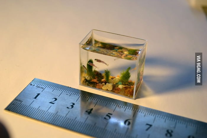 Tiny Aquarium or Giant Ruler?
