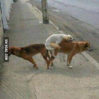 Dog threesome Dog has