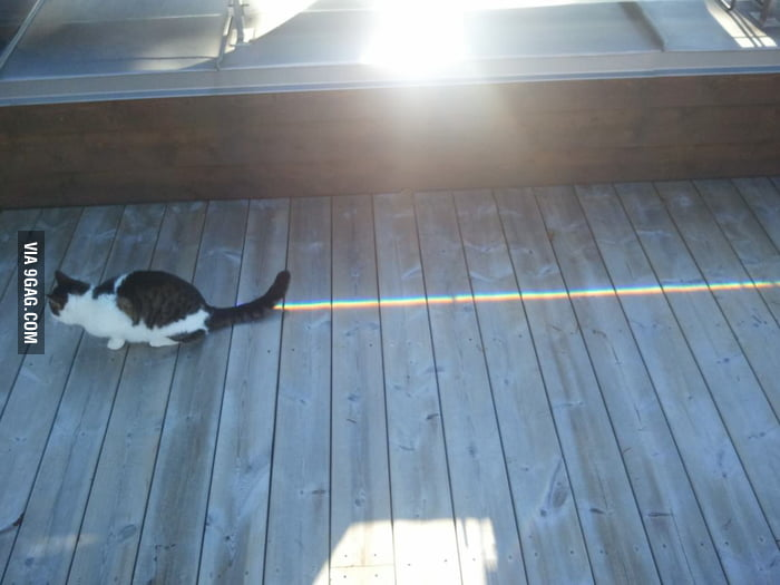 A wild Nyan Cat appears