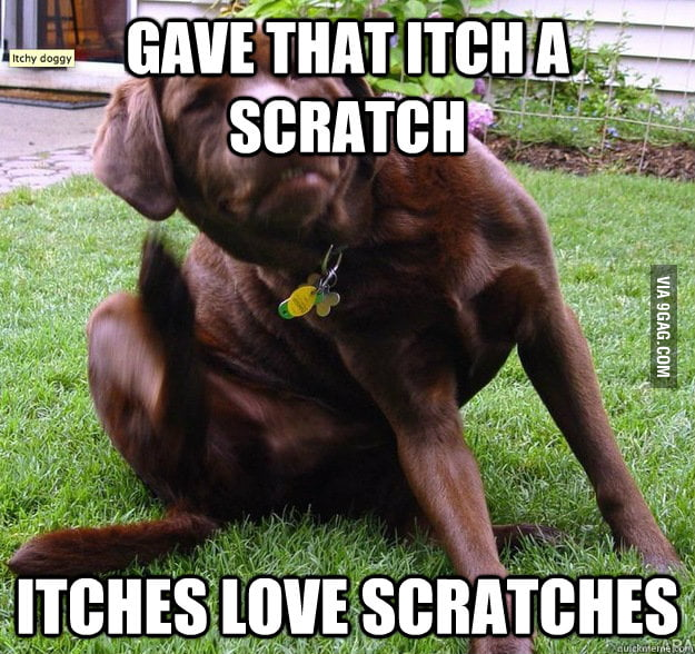 Itches love scratches