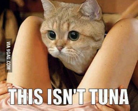 This isn't Tuna!