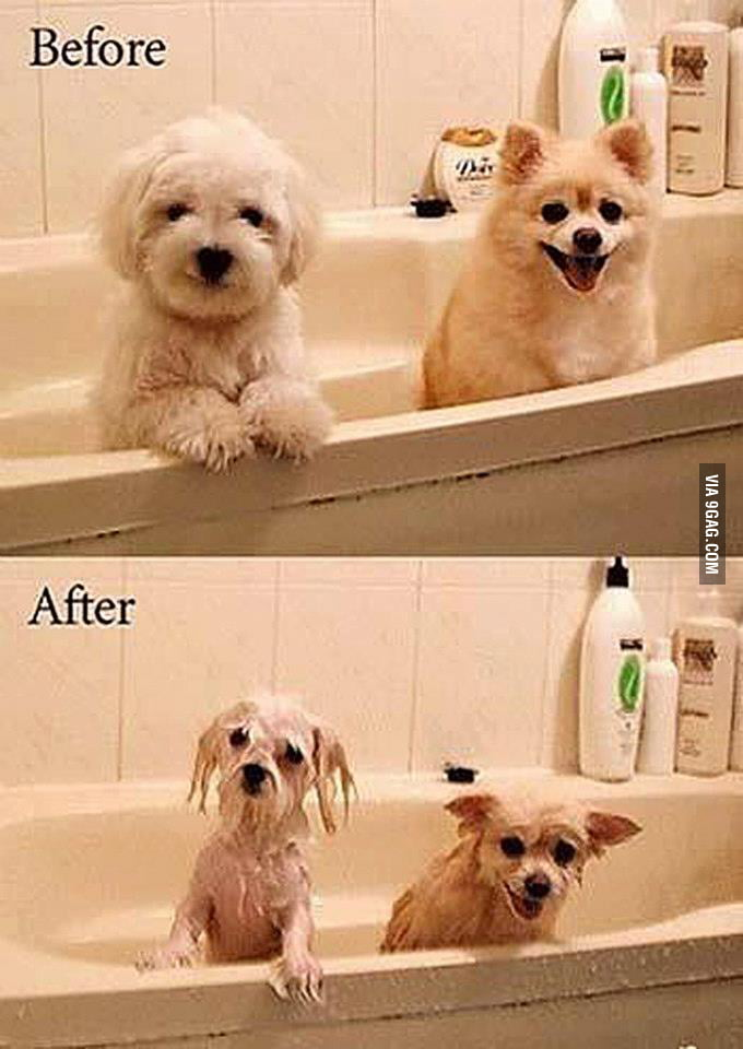 Dogs are cute but not when they are wet