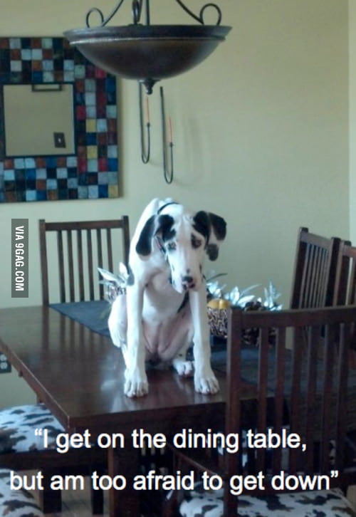 First World Dog Problem