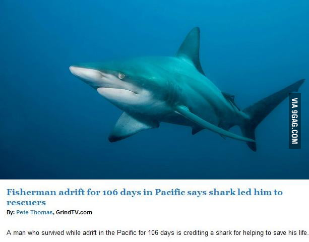 Finally Not Misunderstood Shark