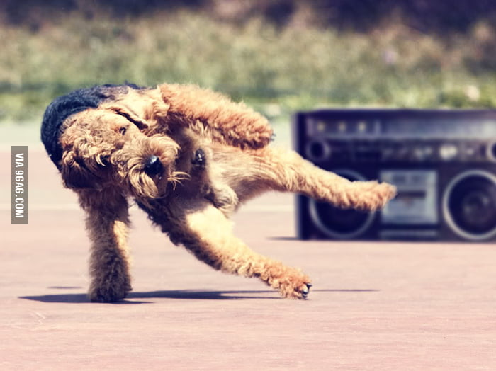 Here's a breakdancing dog