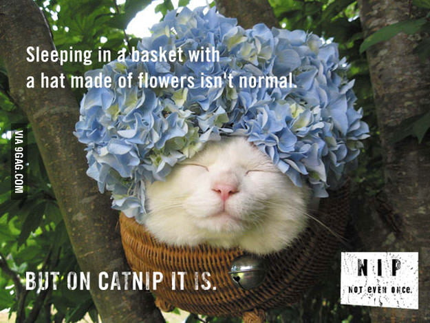 Catnip, Not Even Once!