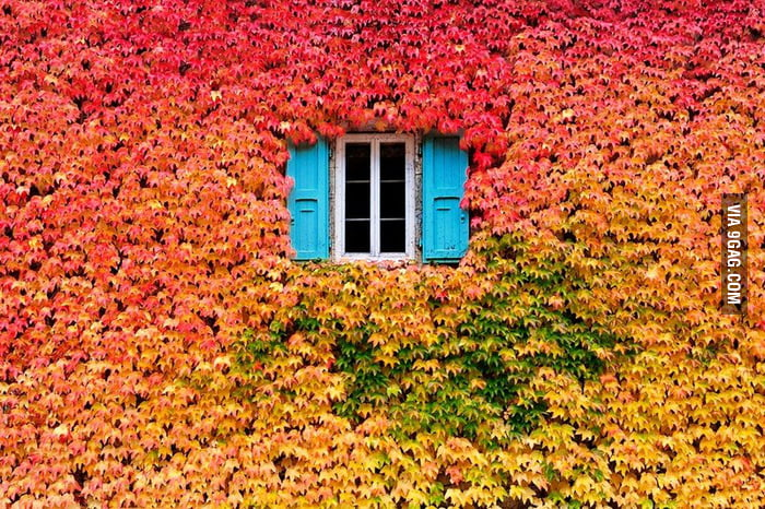 A Wall of Fall