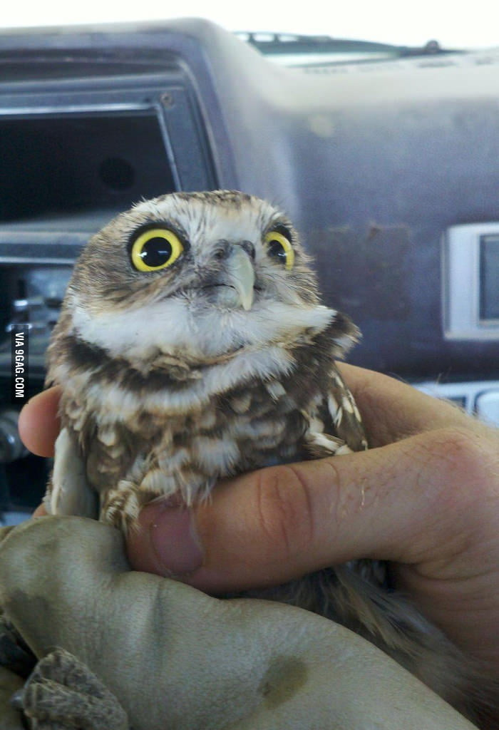 The new O RLY owl!