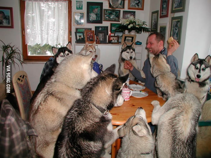 Husky Party