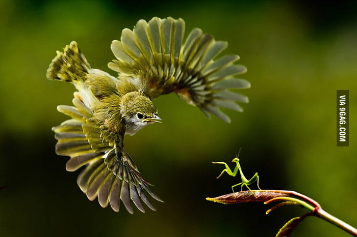 Bird vs Mantis