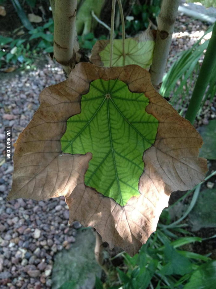 Leafception