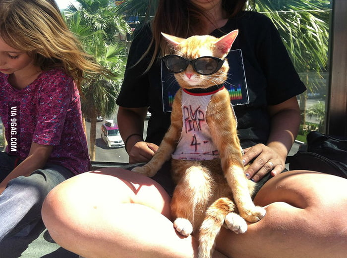 A cat with a pimp tee and sunglasses.