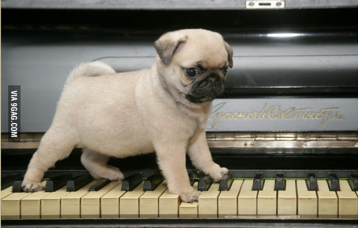 He loves to play piano.