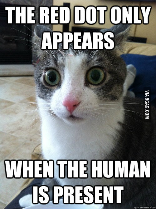 Sudden Clarity Cat on the red dot.