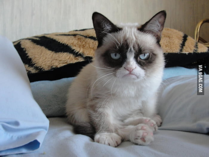 Daily Dose of Grumpy Cat