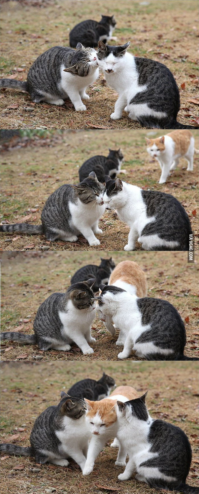 Jealous (lvl cat)