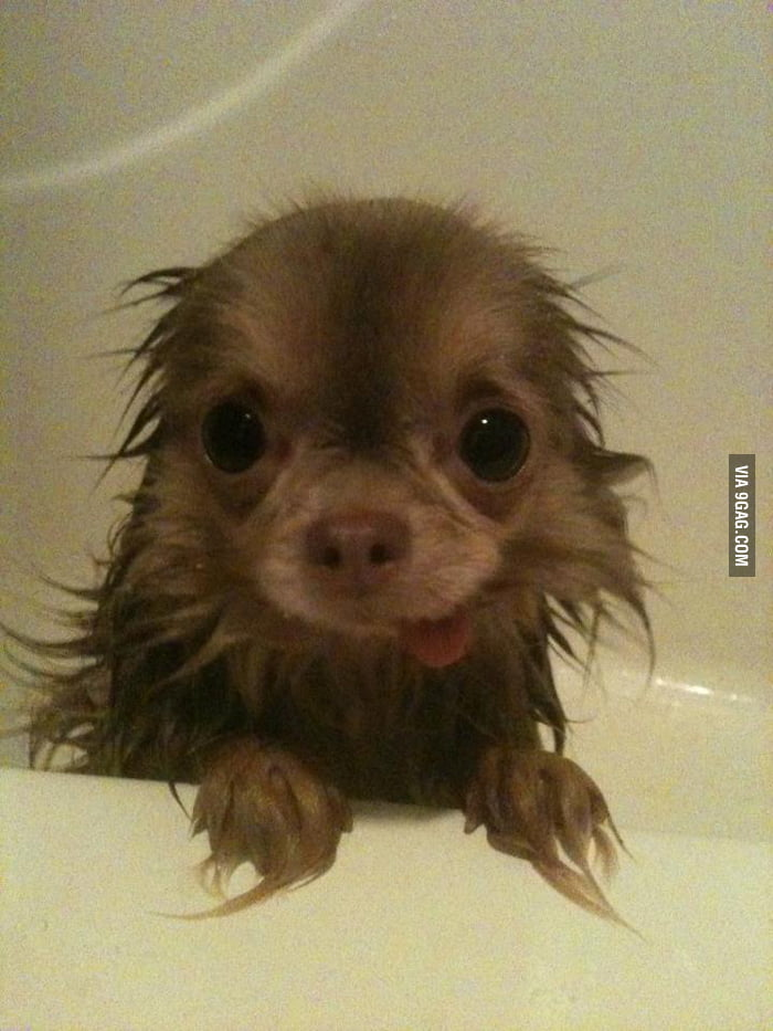Wet Derpy Puppy
