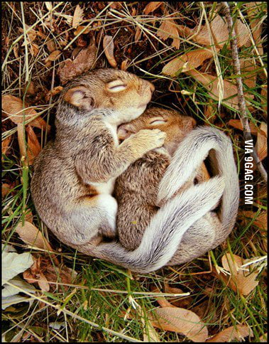 Cute Cuddling Squirrels