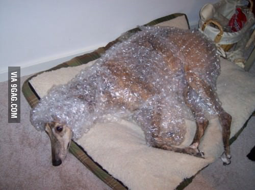 Everybody loves bubblewrap