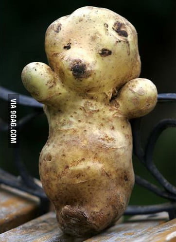 Bear potato