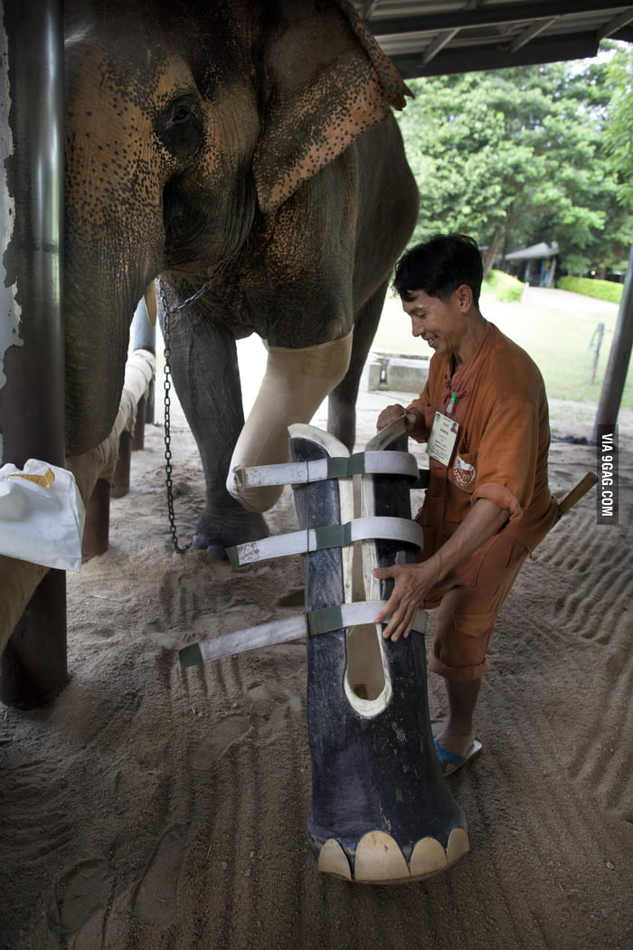 Elephant hospital in Thailand.