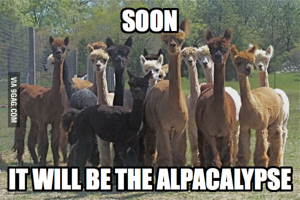 The Alpacalypse.